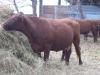 Fall on the Farm 030