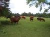 Shady.Grove.Ranch 138