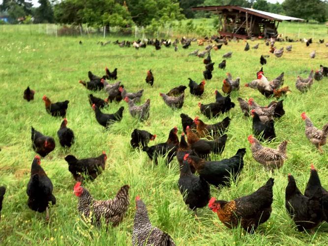 20150615 pastured eggs