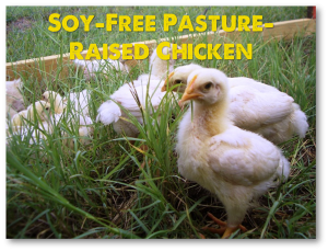Pasture-Raised Chicken Not Fed Soy or Corn or Antibiotics