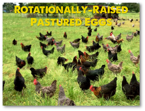 Pasture Raised Eggs Laid by Hens Rotated Multiple times per week and never fed soy or GMOs.