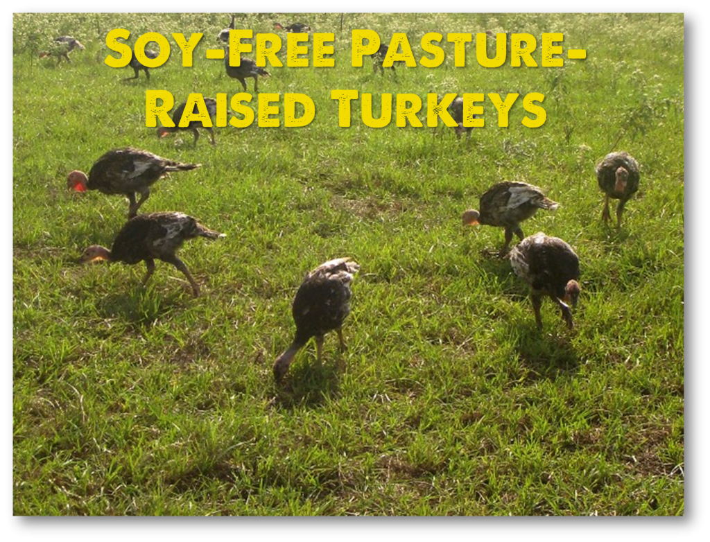 20150615 pastured turkey