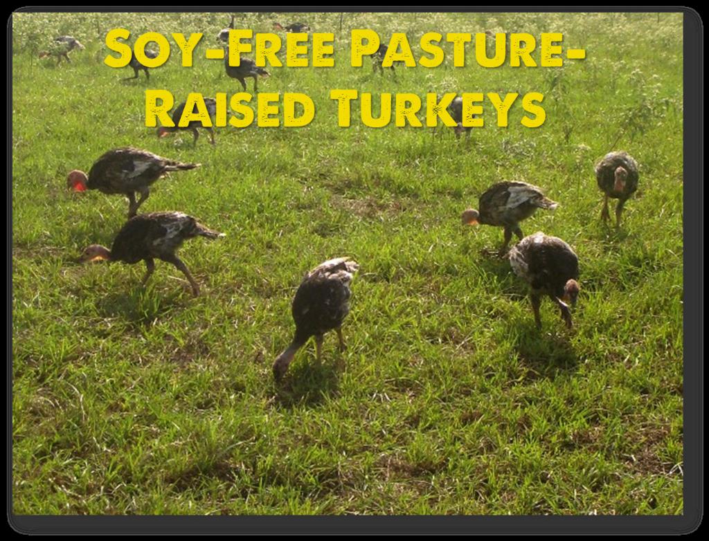 20150615 pastured turkey
