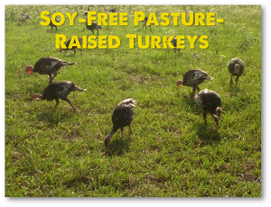 Pasture-Raised Thanksgiving Turkeys Raised with No Soy and No GMOs