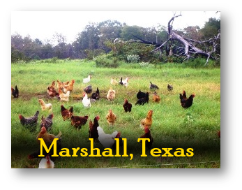Shady Grove Ranch Products In Marshall Texas