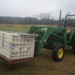 Here is how you move 250 pounds worth of babies to the pasture.