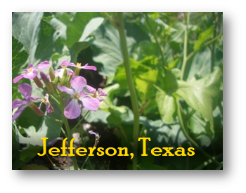 Jefferson Texas Purchasing Information
