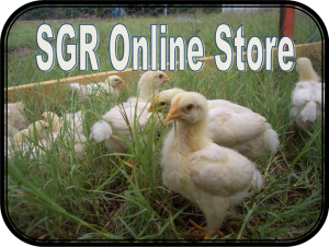 Online Store Thumbnail