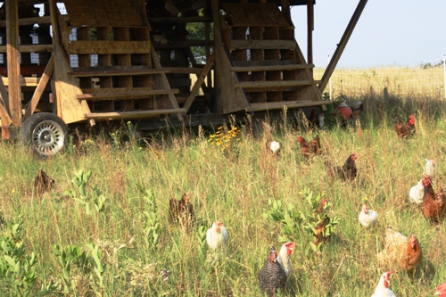 egg mobile with chickens in field